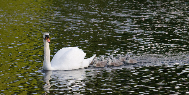 Follow the Leader! by Pinti 1, used under creative commons license