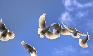 on the wings of a snowy white dove, by liz west. cc license