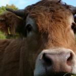 Dein Steak ist wuschelig und voller Neugier, by Brigitte Mackscheidt, cc license