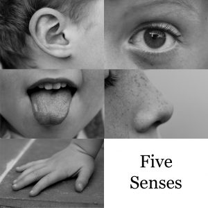 hearing vs multi-sensory